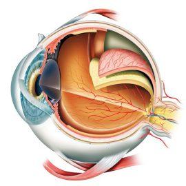 A látás folyamata